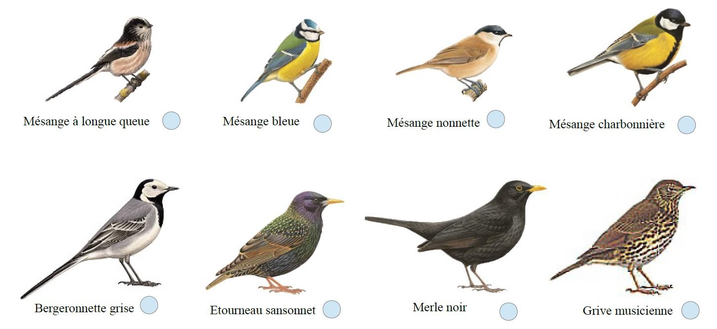 Causerie sur les livres ayant pour th me les oiseaux radio gasp sie - Pour effrayer les oiseaux ...